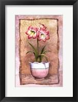 Spring Amaryllis Framed Print