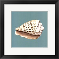 Framed Shell on Aqua II