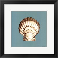 Shell on Aqua III Framed Print