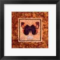 Framed Diva Moth