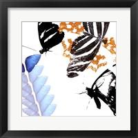 Butterfly Infloresence II Framed Print