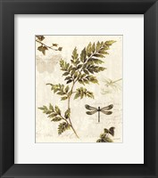 Ivies and Ferns III Framed Print