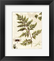 Ivies and Ferns I Framed Print