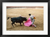 Framed Matador fighting a bull, Plaza de Toros, Ronda, Spain