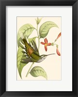 Framed Delicate Hummingbird