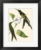 Framed Delicate Hummingbird III