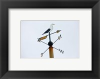 Framed Seagull Weathervane