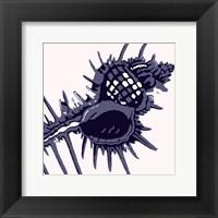 Framed Spider Shell