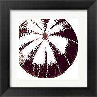 Framed Urchin