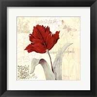 Tulip Gem II Framed Print