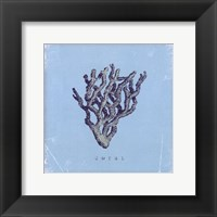 Coral - blue Framed Print
