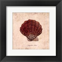 Shells II Framed Print