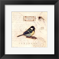 Color Bird IV Framed Print