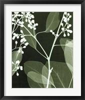 Framed Eucalyptus Buds II