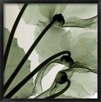 Framed Cyclamen