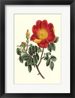 Framed Vibrant Blooms IV