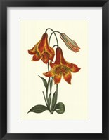 Framed Vibrant Blooms III