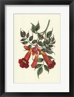 Framed Vibrant Blooms II