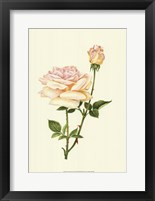 Framed Victorian Rose IV