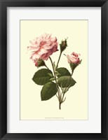 Framed Victorian Rose II