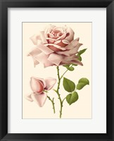 Framed Victorian Rose I