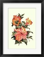 Hibiscus I Framed Print