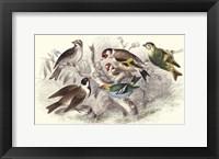 Framed Gold Finch, Buntings, & Wrens