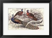 Framed Peacock & Pheasants