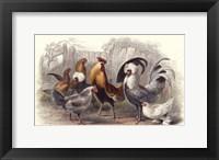 Framed Roosters & Hens