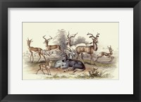Framed Antelope Varieties