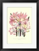 Framed Lily Garden IV