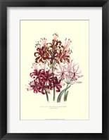 Framed Lily garden III