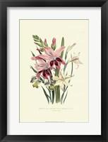 Framed Lily Garden II