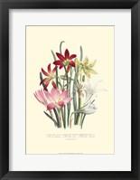 Framed Lily Garden I