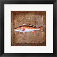 Framed Ocean Fish IX