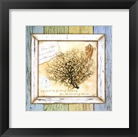 Framed Sea Treasures II
