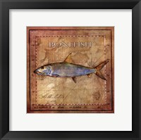 Framed Ocean Fish IV