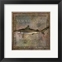 Framed Ocean Fish VI