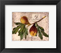 Fresco Fruit VI Framed Print