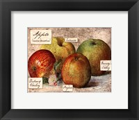 Fresco Fruit VIII Framed Print