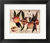 Fresco Fruit IX Framed Print
