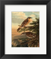 Small Woodland Birds I Framed Print