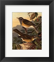 Small Woodland Birds III Framed Print