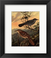 Small Woodland Birds IV Framed Print