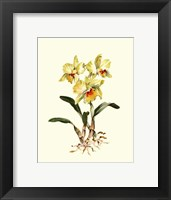 Framed Yellow Cattleya Orchid