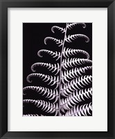 Framed Fern II