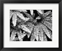 Framed Fern IV