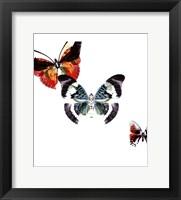 Framed Butterflies Dance III