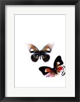 Framed Butterflies Dance VI