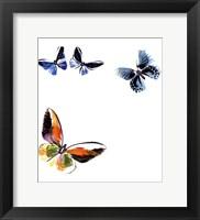 Framed Butterflies Dance VII